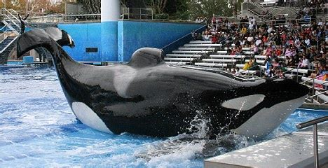 Dawn Brancheau attack: SeaWorld killer whale 'would not